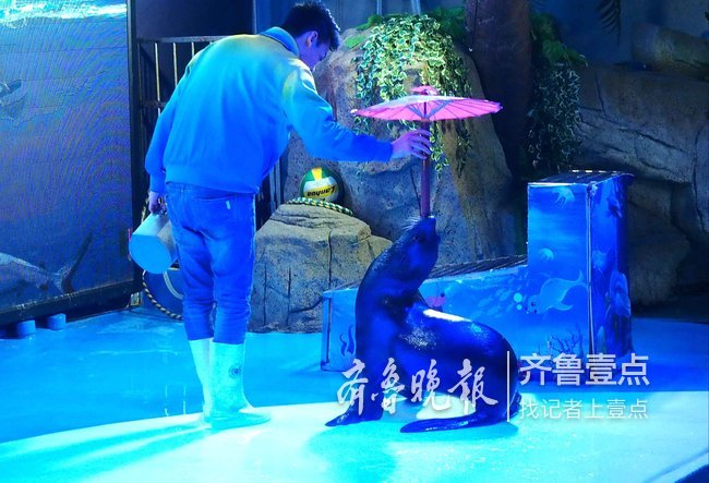 春节这些地方的人和动物都很忙,节后可以歇歇了!
