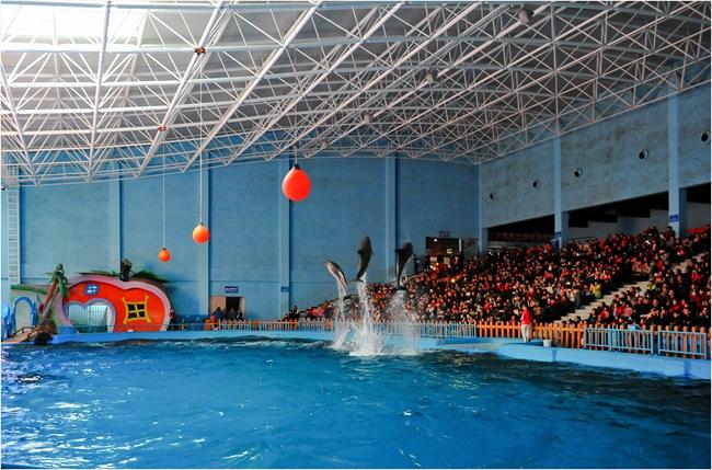 海洋极地世界海豚表演3