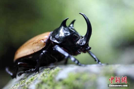 全球昆虫数目持续减少 专家警告百年后恐遭灭绝
