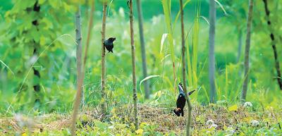 """这里有一片""""幸福""""湿地,有人管有人爱"""