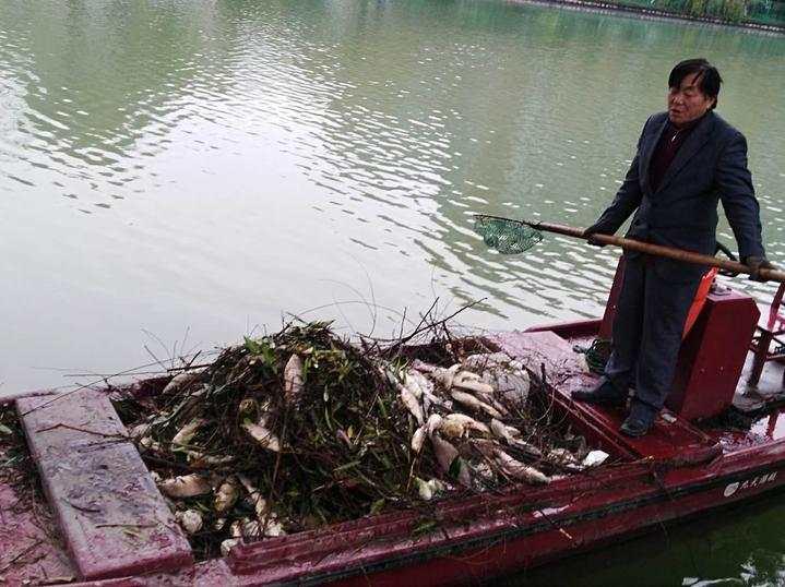 放生成杀生!杭州这条水源河一上午捞起满船死鱼