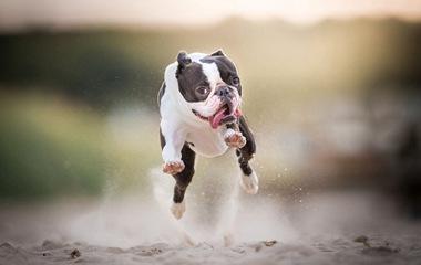 摄影师拍摄狗狗瞬间 奔跑表情呆萌喜人