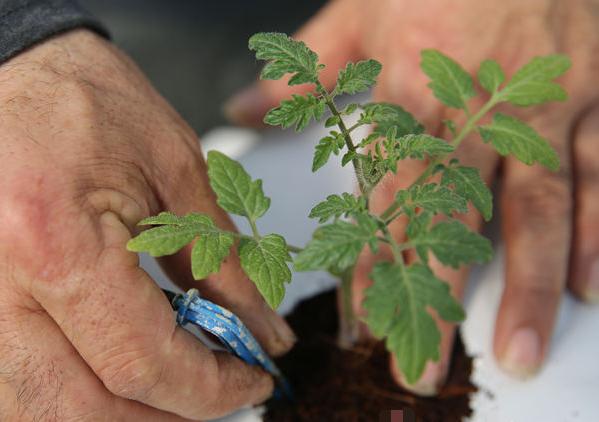 人勤春来早 高品质蔬菜种植致富增收