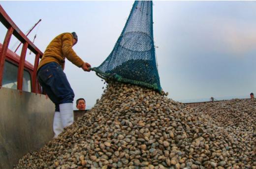 高清:天暖了水温升高了,海货丰收的日子来到了