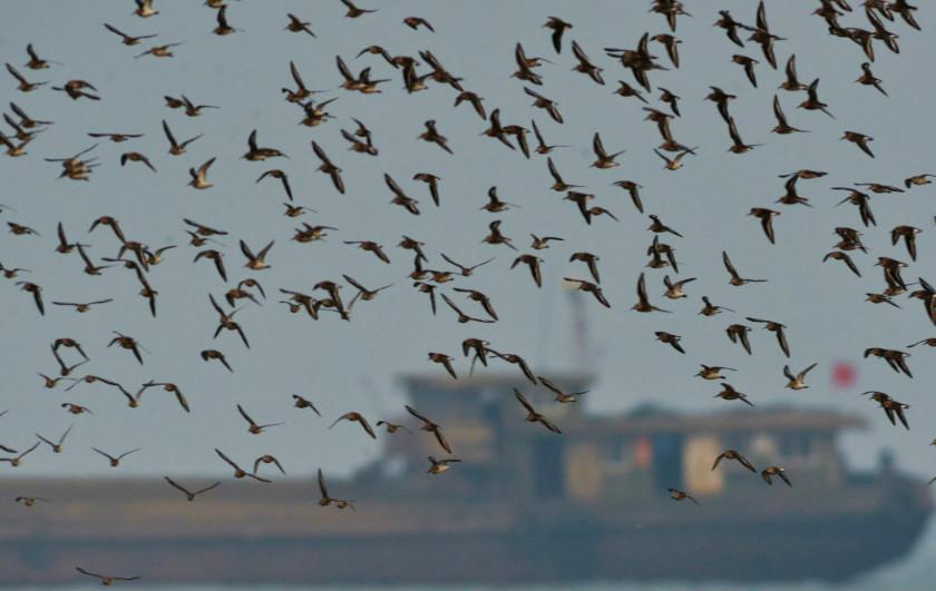 """""""鸟潮""""迁徙过境青岛,一起来观鸟吧!"""