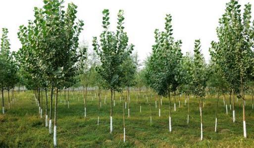 """聊城制定生态修复""""硬杠杠"""" 新增造林7万亩"""