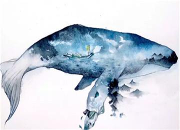 """在长岛,与来自海洋的""""白精灵""""来一场偶遇"""