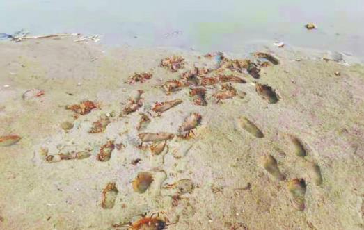 30米冲刺惊心动魄 淄博六旬保安孝妇河边救起4岁女童