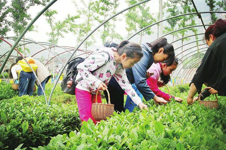 济南:发挥省会独特优势 让乡村实现美丽蝶变
