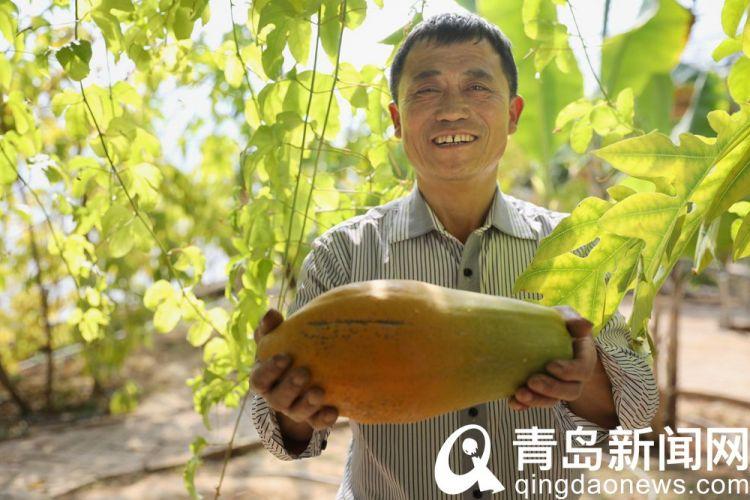 高清:南果北种十一年探索 青岛这个农庄春天瓜果飘香