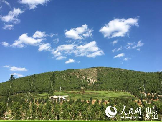 """济南:今年新造林12.76万亩 多举措推进""""生态泉城""""建设"""