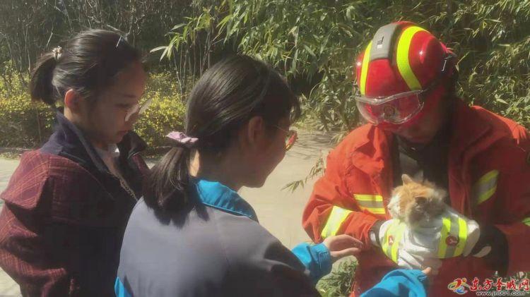 小猫被困于树梢 消防员暖心救下