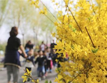 约起来!滨州市区赏花攻略快收下