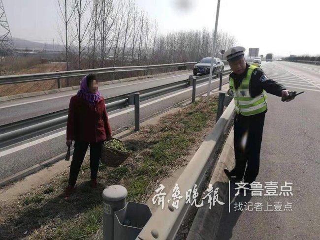 春天来了吃口鲜的,青岛老太太跑上高速公路挖野菜