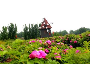 邹城赏花季开启 花期从3月连续到6月