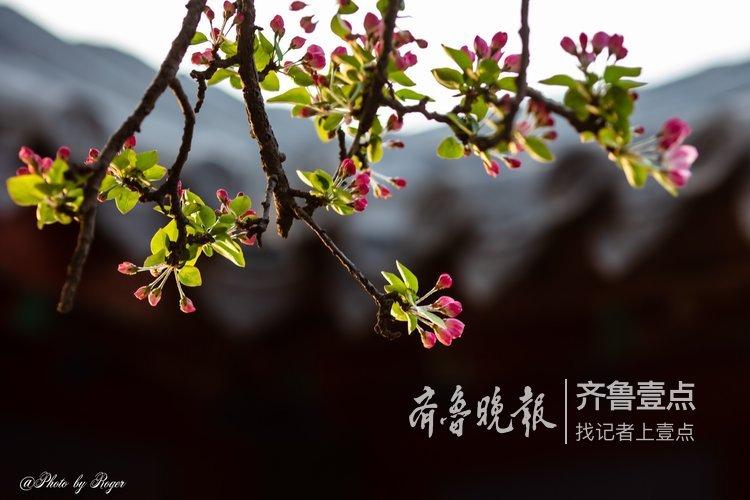 又是一年春满园,大明湖到底有多美