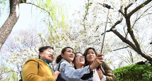 组图 樱雨缤纷季!济南第十八届五龙潭樱花节开幕