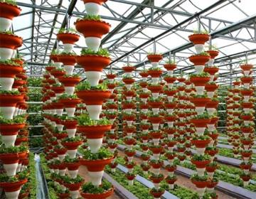 """组图丨巨人南瓜、无土栽培 今年""""菜博会""""将有这些蔬菜顶尖科技亮相"""