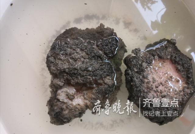 济南市民河边挖出不明物体!专家鉴定:是太岁