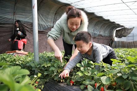 孩子们高兴地自己采摘草莓