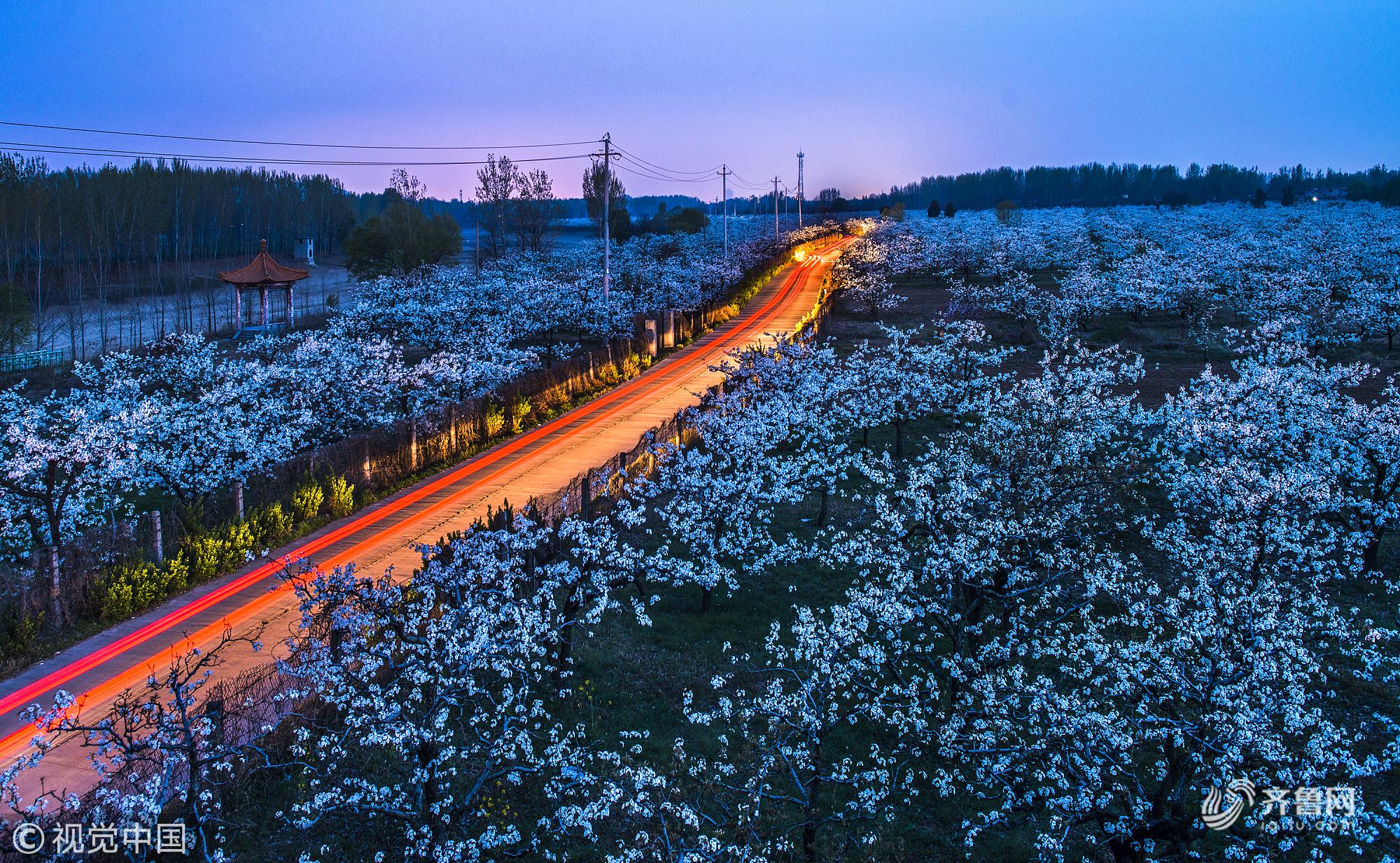 2019年4月3日,山东省枣庄市刘村梨园风景区5000余亩梨花竞相开放.