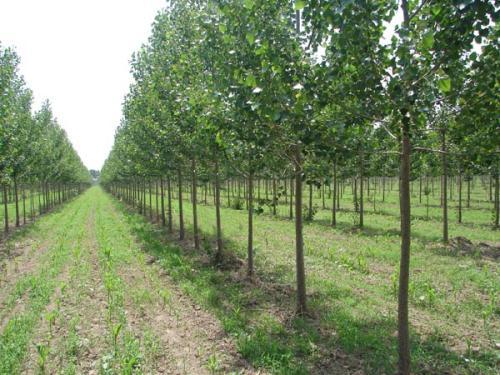 聊城:春季国土绿化取得新进展 完成新增造林62740.53亩