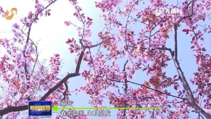 春光如画!《山东新闻联播》多组镜头展现威海南海新区的勃发生机
