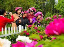 菏泽:姹紫嫣红总是春 牡丹花开迎客来