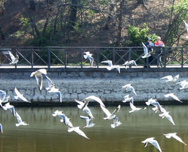 快來圍觀!中山公園海鷗、郁金香共譜春日序曲