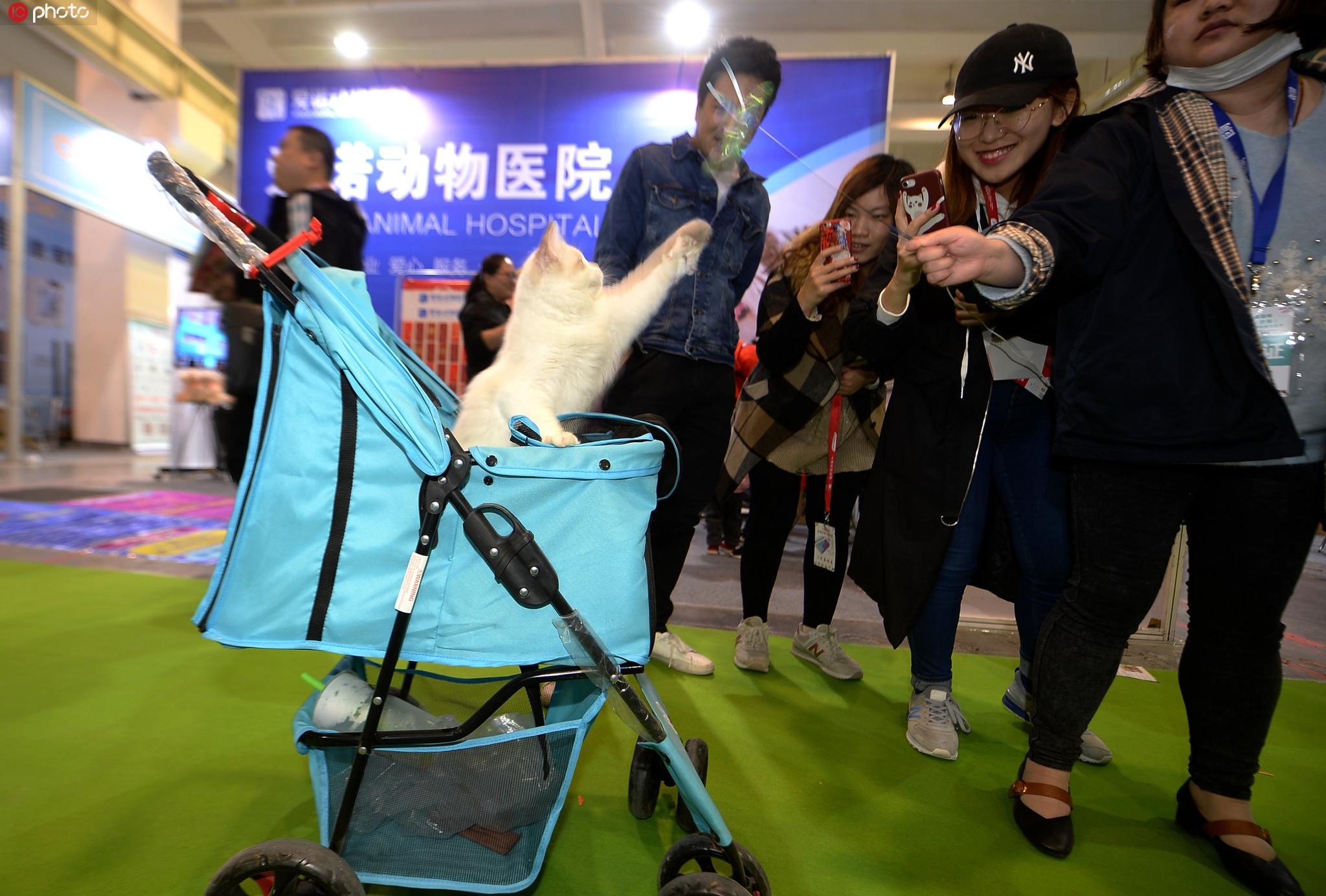 推着婴儿车遛猫!宠物专用房车亮相济南宠物展