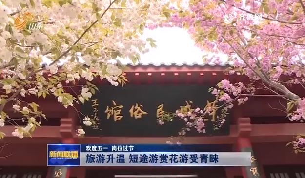 欢度五一 | 《山东新闻联播》、《晚间新闻》播出报道荣成樱花烂漫绽放
