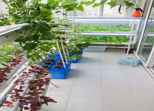 张店六旬老人自制有机肥设备 把阳台变成小菜园