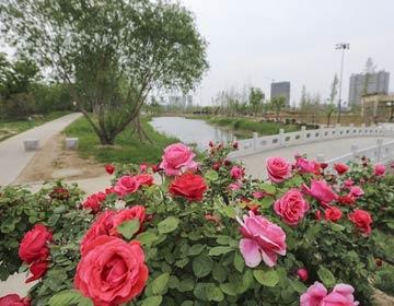 滨州植物园初步成型 市民可以游园赏景了
