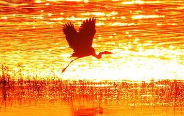 成群白鹭栖息入海口 镜头拍下夕阳中最美身影