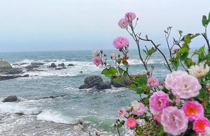 青岛这地方鲜花盛开美不胜收 宛如山水画卷