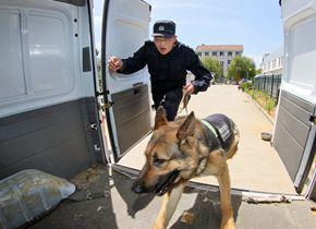 """实拍烟台警犬训练基地 """"无言的战友""""训练忙"""