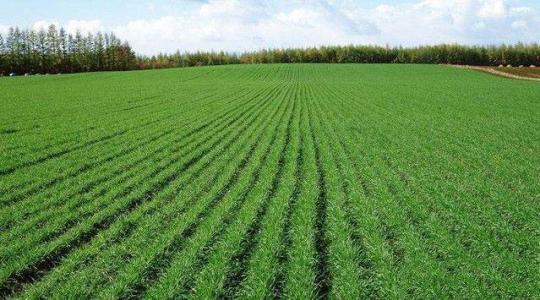 聊城:农村土地流转面积近四成 总数达到290.72万亩