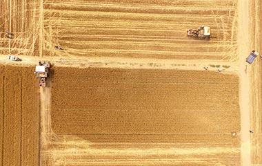 山东聊城:农民抢收小麦忙