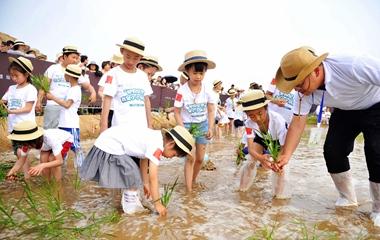 青岛举办城市插秧节 亲子共学农事技巧