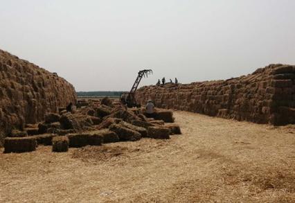 聊城小麦秸杆还田面积将达95%以上