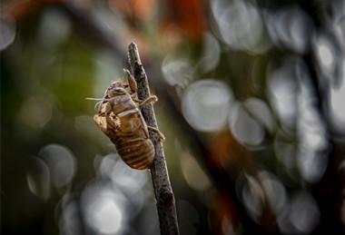 今日夏至 蝉始鸣 半夏生