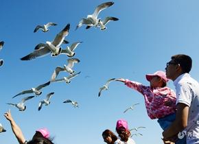 人与海鸥和谐互动,烟台这个海岛不来遗憾