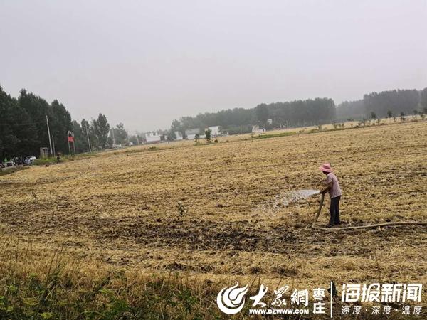 沙沟镇抗旱抢种 8个泵站喷灌3.5万亩农田