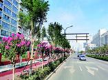 济南有条网红路!开满紫薇花,花期3个月,可慢慢欣赏