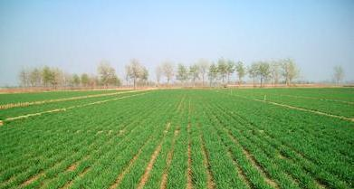 农田喊渴,聊城引黄5232万立方米抗旱