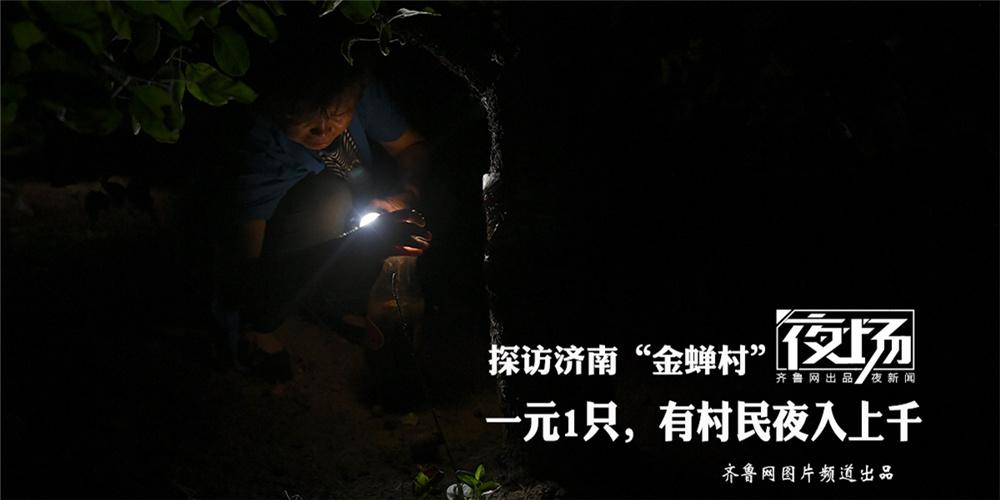 """探访济南""""金蝉村"""":一元一只上门收购,有村民夜入上千"""