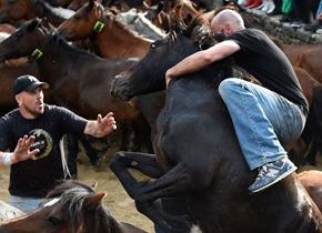"""西班牙民众与野马""""较劲""""场面惊险刺激"""