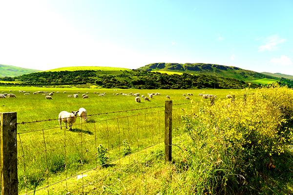 03  苏格兰乡村风光