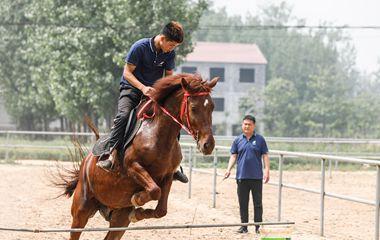 """济宁""""80后""""返乡当马倌 带领村民走上致富路"""