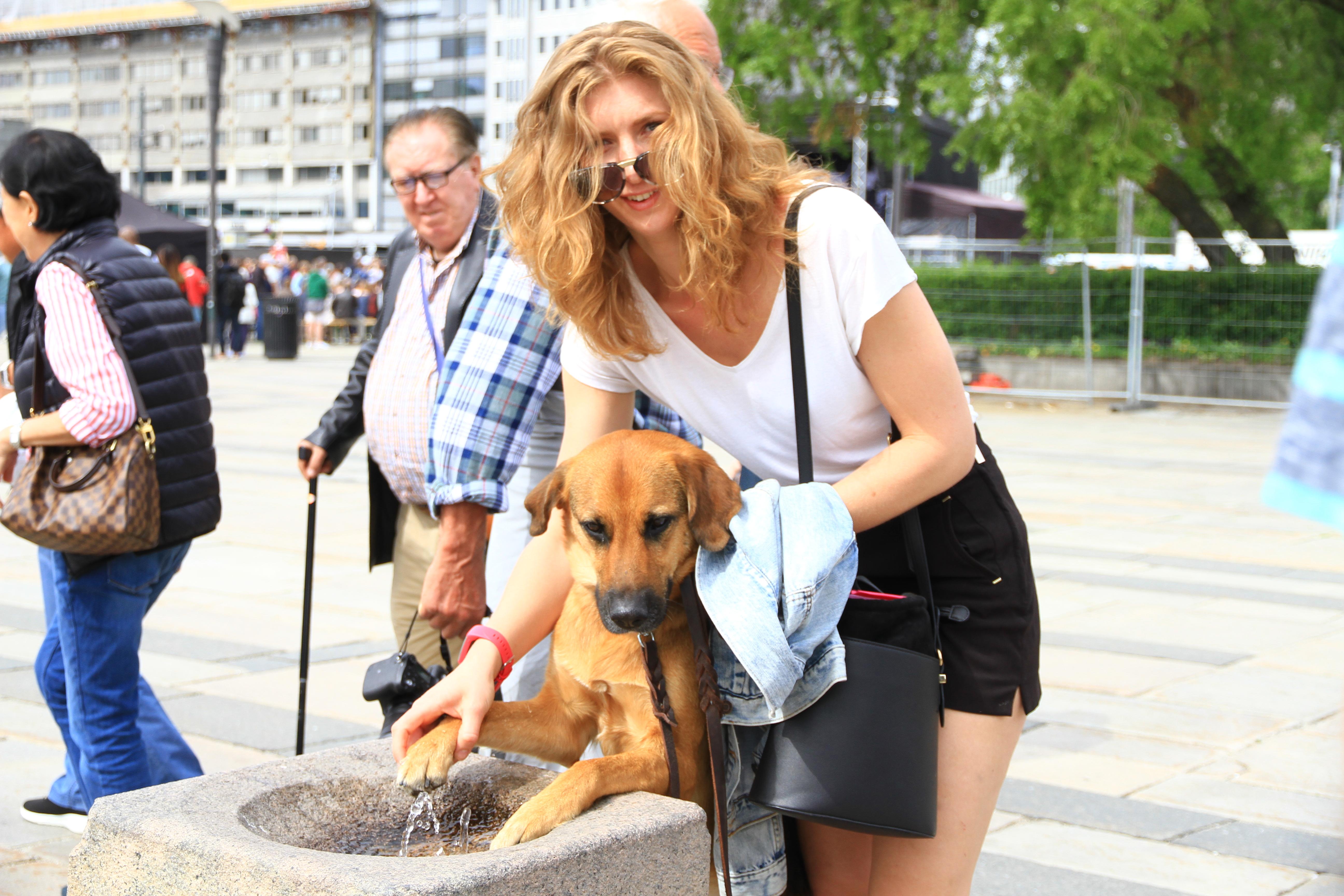 91、挪威奥斯陆:给狗狗喂水